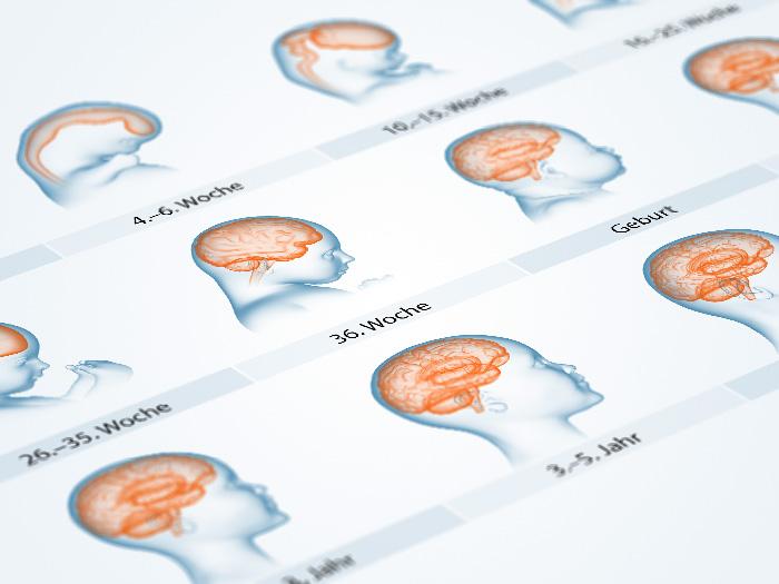 Entwicklungsphasen des Gehirns während der Schwangerschaft und nach der Geburt. Gehirnentwicklung - chronologische Illustrationen: Embryo, Schwangerschaftswochen, Geburt, Lebensjahren. Entstehung des Neuralrohrs, Hirnbläschen, Vorderhirn, Mittelhirn, Großhirn, Zwischenhirn, Kleinhirn, Rückenmark und Gehirnstrukturen.