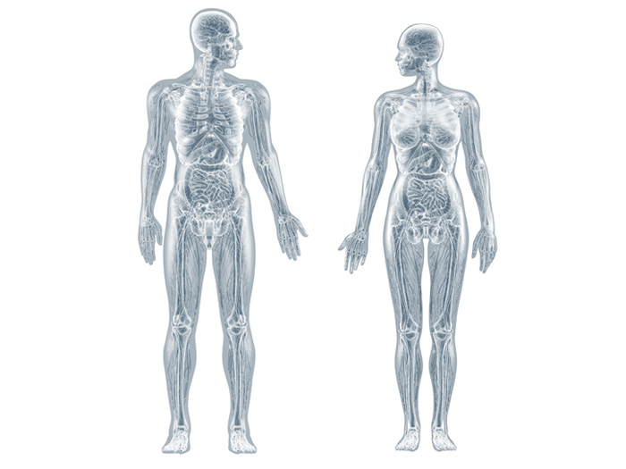 Anatomische 3D-Illustrationen: Mann und Frau