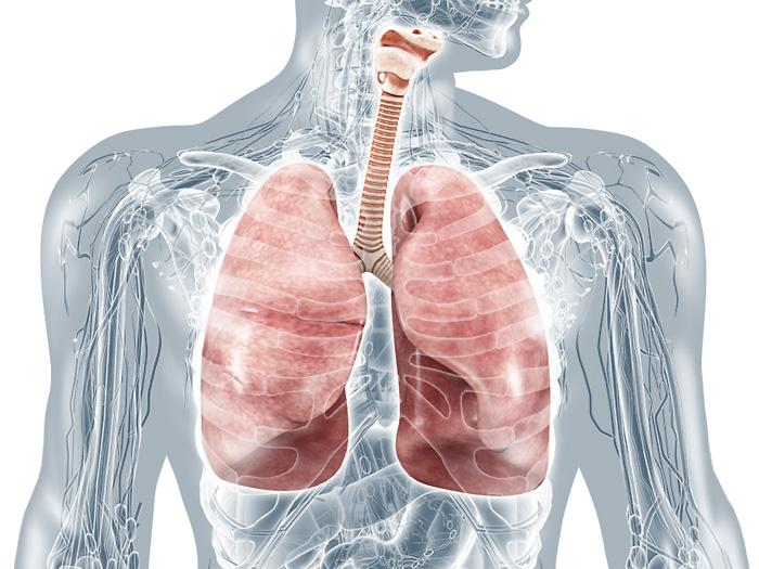 Lungen und Atmungsorgane: medizinische Bilder und anatomische Illustrationen