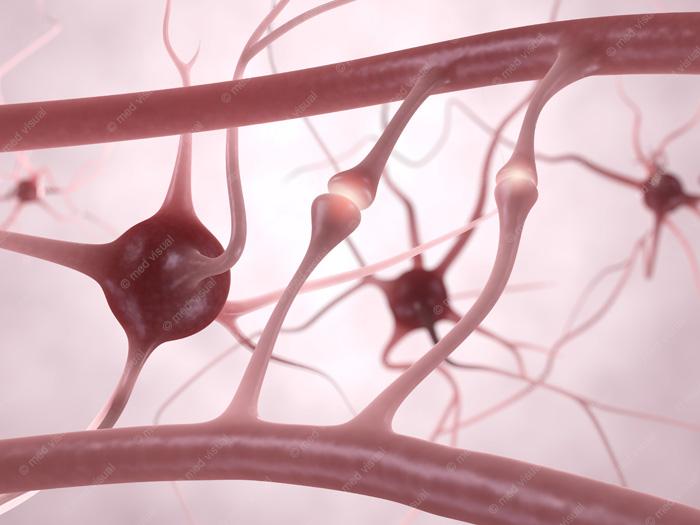 Nervenzellen, Synapsen und Neuronen - 3D Illustration